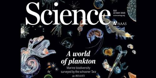 Couverture de la revue Science du 22 mai 2015, dédiée au plancton et aux premiers résultats sientifique de l'expédition Tara Oceans