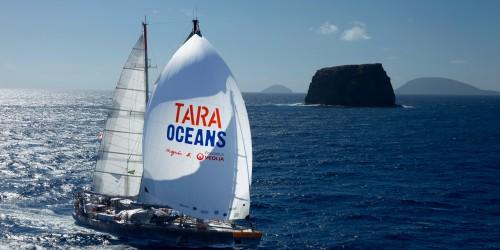 La goélette Tara pendant l'expédition Tara Oceans